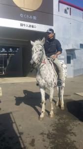 1214ふれあい祭り馬のマリちゃん
