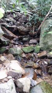 20150809森の探検隊15