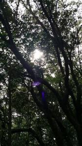 20150809森の探検隊16