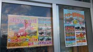 201603ナイター闘牛3