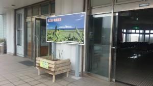 亀徳新港の観光PR看板下に「さとうきびの苗」が設置!