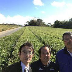 徳之島製茶-2